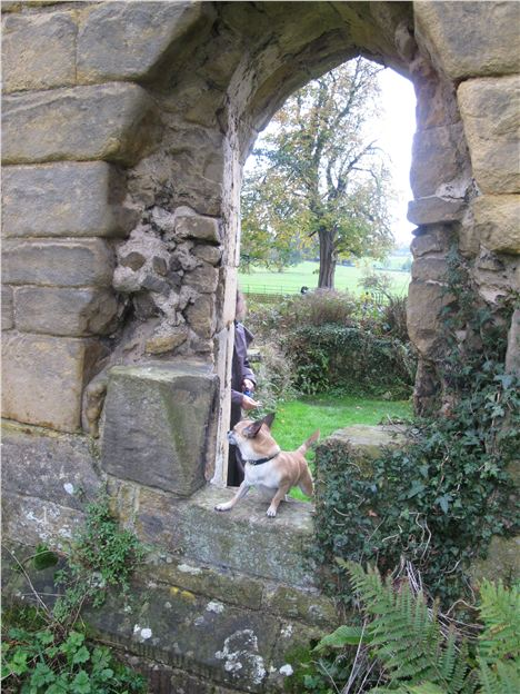 Smidge At Fountains Abbey