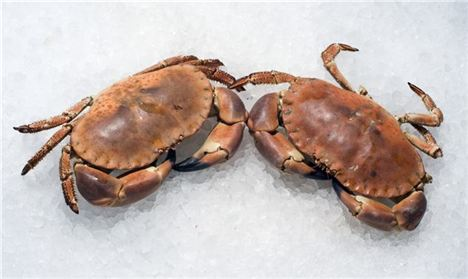 Whitby Brown Crab