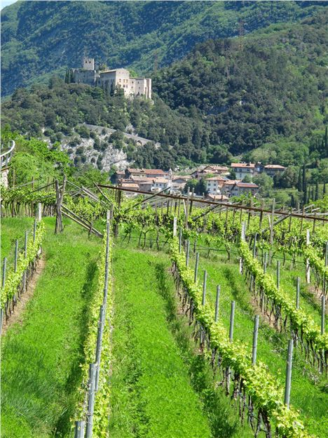 Vale Dei Laghi, Clad In Vines