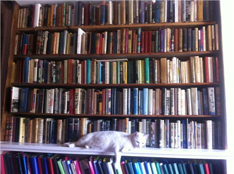 Shakespeare And Company With Shop Cat Kitty