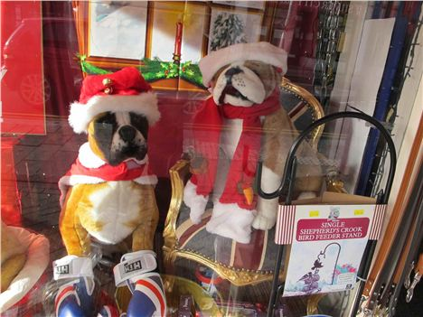 Window Display. Podgy Paws