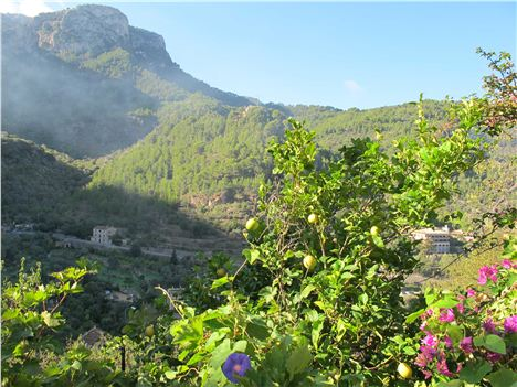 Fruitful Deia In Its Spectacular Mountain Setting