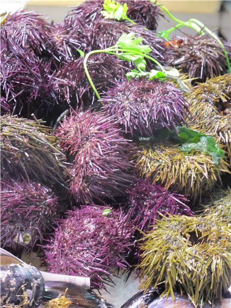 Sea Urchins, Central Market