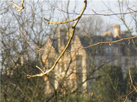 Castle Leslie From The Woods