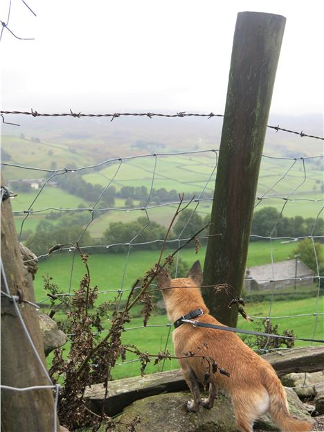Surveying The Swaledale Landscape