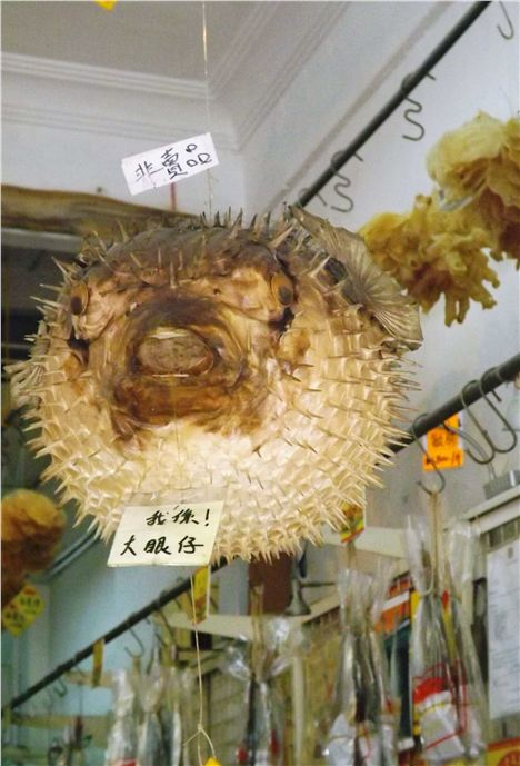 Dried Puffer Fish In Tai O Market