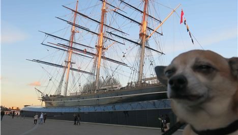 Chelsea Chihuahua! Dog-friendly London Tips