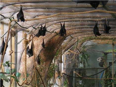 Bat House At Durrell