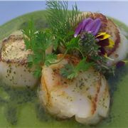 Scallops In A Green Sauce