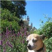 Dog Barred From The Royal Pavilion
