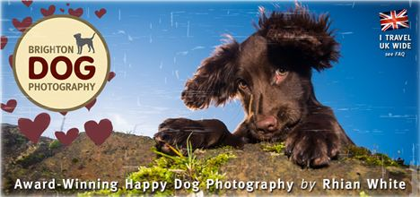 Brighton Dog Photography