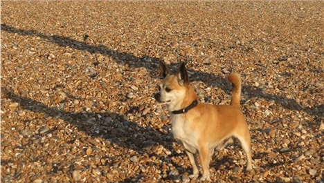 Brighton Breezy For An Old Sea Dog