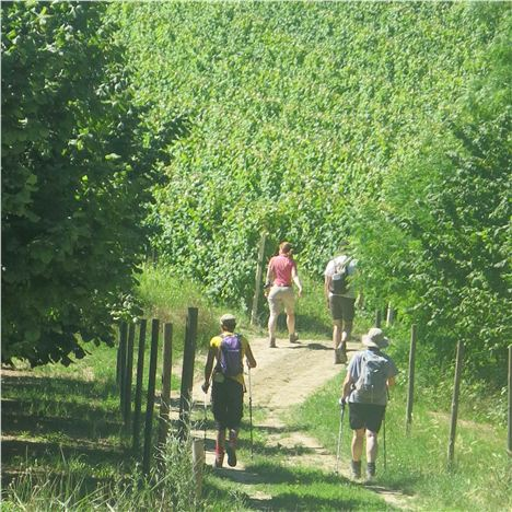 Tramping Towards Barolo
