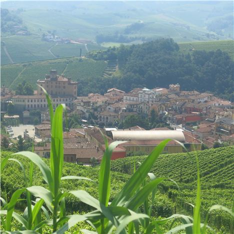 Barolo Village From The Steep Vineyards